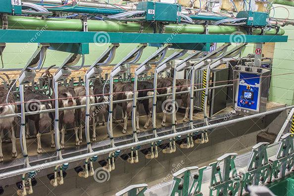 Moderm milkingrobot in Thyringen goatfarm, located in Estonia